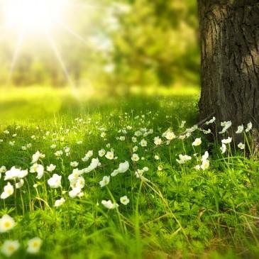 Negative Thinking & Mindfulness